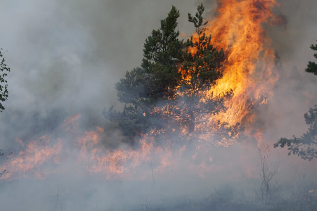 Photo of a forest fire